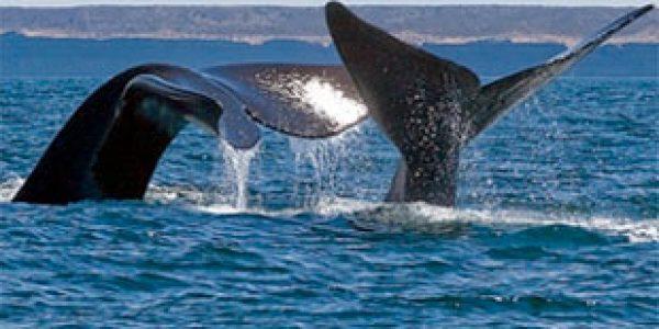 avistaje-ballenas